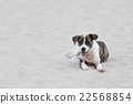 Dog on the sand 22568854