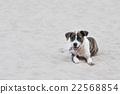 Dog on the sand 22568854