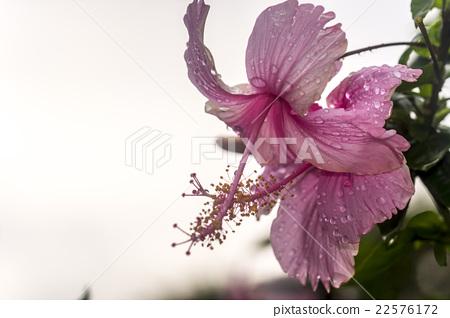 Bali Nature 22576172
