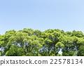 树 树木 树栖 22578134