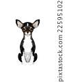 動物 寵物 狗 22595102