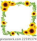 向日葵 花朵 花 22595374