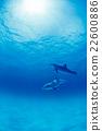 寬吻海豚 海 大海 22600886