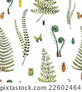 pattern fern illustration 22602464