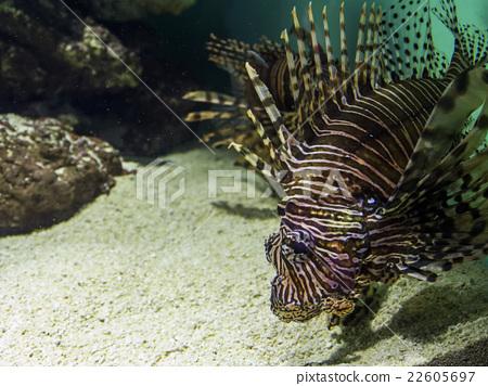 深海鱼 22605697