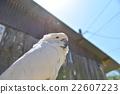 parrot, aum, white 22607223