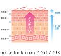 skin, cross-section, diagram 22617293