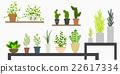 mini plants 22617334
