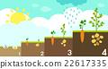 planting growth process 22617335