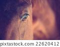 Horse eye 22620412