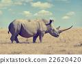 African white rhino 22620420