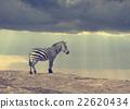 Zebra 22620434