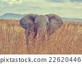 Elephant 22620446