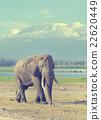 Elephant in National park of Kenya 22620449