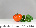 Fresh tomato and salad 22621043