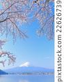 富士和櫻花盛開 22626739