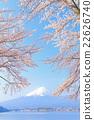 富士和櫻花盛開 22626740