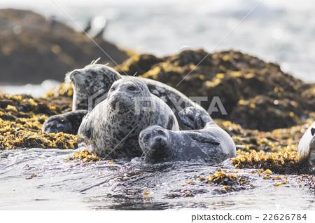 Zenigata Seals 14 22626784