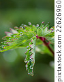 Beautiful macro of dew  22626960