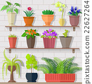Houseplant Set Design Flat Concept 22627264