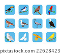 Collection of Various Birds Flat Design 22628423