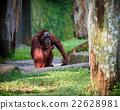 Wild animal in nature 22628981