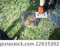 野豬 野生動物 野生生物 22635002