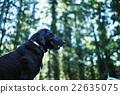 動物 狗 狗狗 22635075