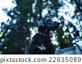 動物 狗 狗狗 22635089