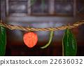 bon festival, Winter Cherry, sacred straw ropes 22636032