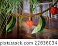 bon festival, Winter Cherry, sacred straw ropes 22636034