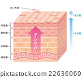 skin, cross-section diagram, cell 22636069
