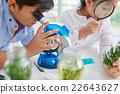 Examingi plants 22643627