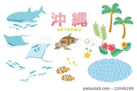 鯨鯊 海龜 沖繩 22646289