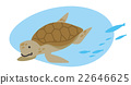 sea turtle animal 22646625
