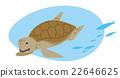 sea turtle, chelonia mydas, green sea turtle 22646625