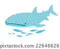 고래 상어 22646626