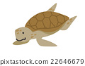 sea turtle vector 22646679