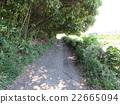 road, avenues, path 22665094