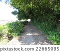 forest road, woodland path, avenues 22665095