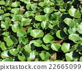 foliage, leaf, leafs 22665099