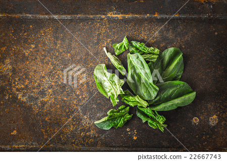 Fresh spinach on the metal rusty background  22667743