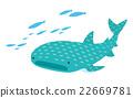 鯨鯊 海魚 海水魚 22669781
