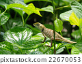 Chameleon on green leaf. 22670053