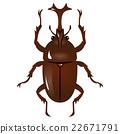 rhinoceros, beetle, bug 22671791