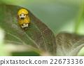 瓢蟲 蟲子 漏洞 22673336