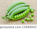 Pods of green peas 22680042