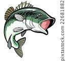 ปลากะพงปากกว้าง,ปลา,ปลาน้ำจืด 22681882