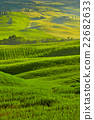 Beautiful view of green fields in Tuscany 22682633