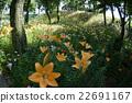 盛開的鮮花 22691167